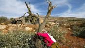Palestijnse vrouw bij olijfboom