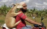 islam dieren